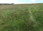 Land_Bacup_meadow