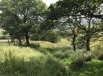 Land_Bacup_wood